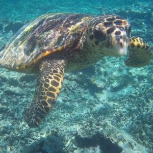 Top 5 wildlife experiences in the Seychelles