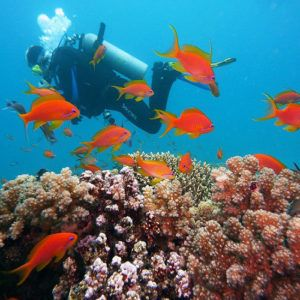 5 reasons why you should take your teenager on a dive vacation