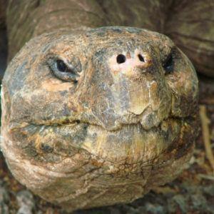 Galapagos: where to encounter giant tortoises in the wild