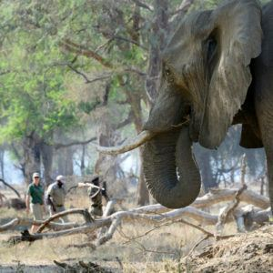 Top 10 lodges for walking safaris in Africa