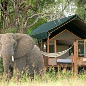 When to go on safari