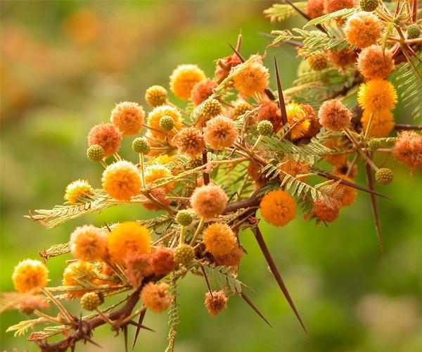Endemic Flora Galapagos