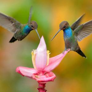 The 5 most incredible luxury locations for birdwatchers in Latin America