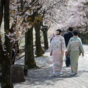 Guide to seeing the cherry blossom in Japan