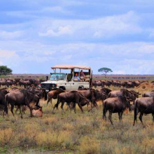 5 of the best places to see the Great Migration