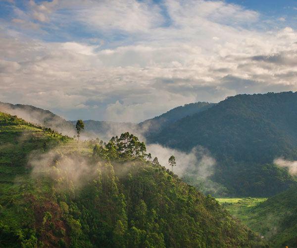 Bwindi Impenetrable Forest Uganda