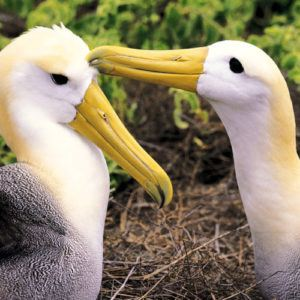 Galapagos: the 7 top-rated visitor sites