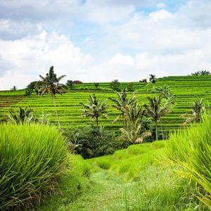 A short guide to Canggu in Bali