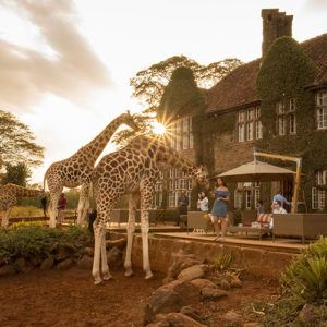 Unforgettable wildlife encounters