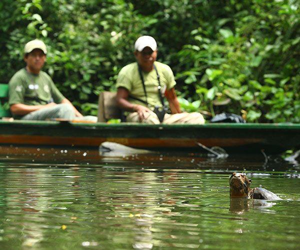 giant-river-otter1