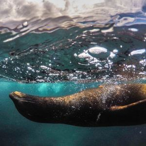 15 reasons to visit the Galápagos Islands