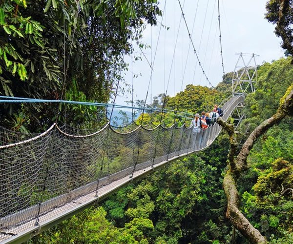 canopy walk in nyungwe forest Rwanda