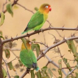 Top 5 birding locations in Africa
