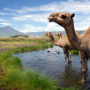 Top 5 off-the-beaten-track camps in Tanzania