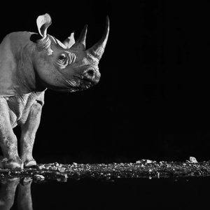 Travel video of the week: David Yarrow reveals his photography secrets
