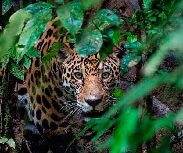 amazon-wildlife