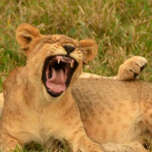 5 great things to do on safari other than a game drive