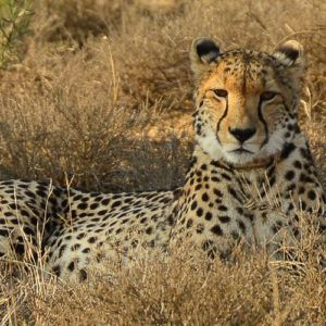 The best safari experience in Africa?
