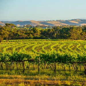 Top 5 places to visit in the Barossa Valley