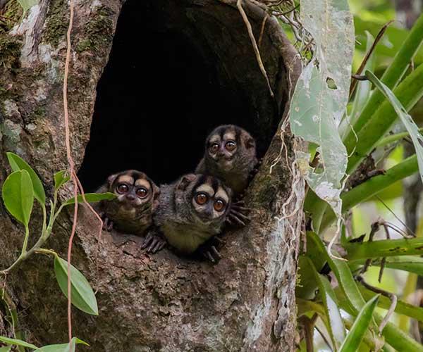 amazon-wildlife-tours