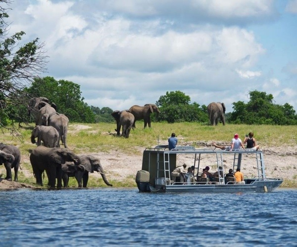 Game Viewing On Chobe River From Zambezi Queen