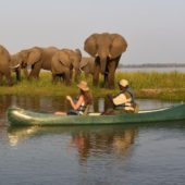 Canoeing On The Zambezi From Sausage TRee Camp