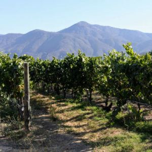 Chile: a luxury, organic wine tour like no other
