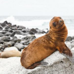 5 reasons to charter a private yacht for the best experience in the Galapagos