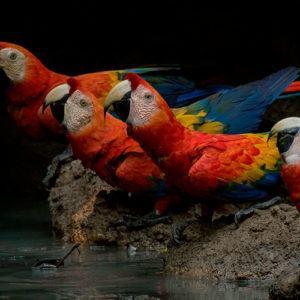 Amazonia: the paradise of nature photographers