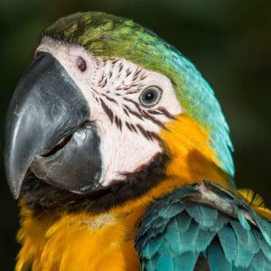 Brazil's top 5 nature destinations