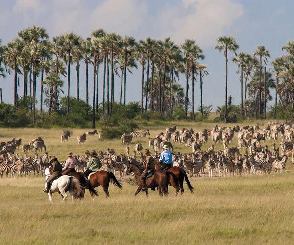 Ride with Zebra - African Horseback Safari