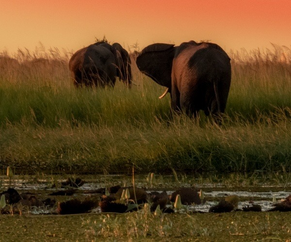 Chobe Elephant Sunset