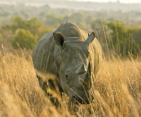 Volunteer with Rhinos at Imire