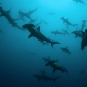 Top 5 dive sites in Galapagos for adventure seekers