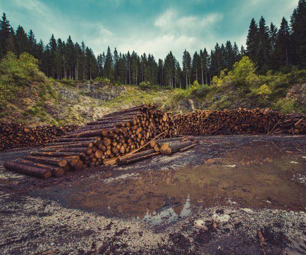 Deforestation2