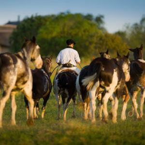 The most luxurious horse-riding retreats in Latin America