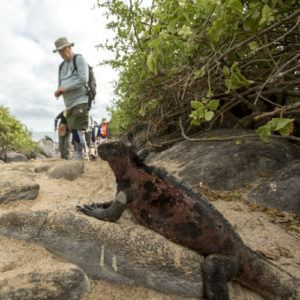 How to travel responsibly to the Galapagos Islands