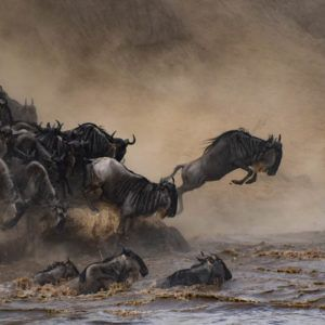 Everything you need to know about the Serengeti Great Wildebeest Migration