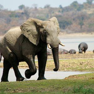 Malawi safaris - an overview