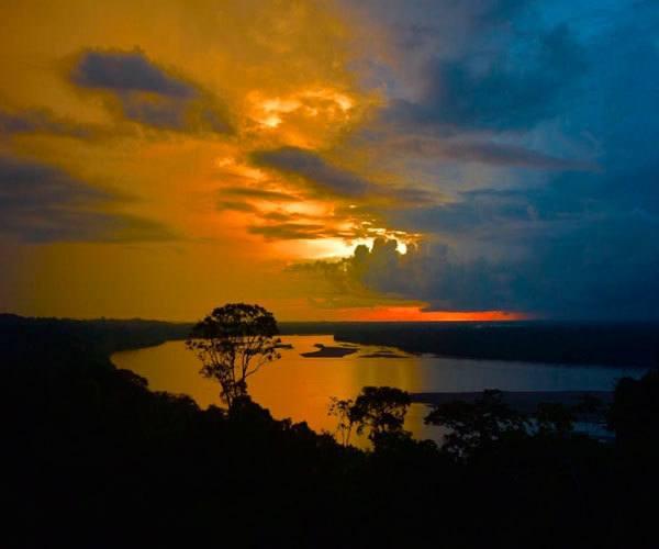 Rainforest- Napo Wildlife