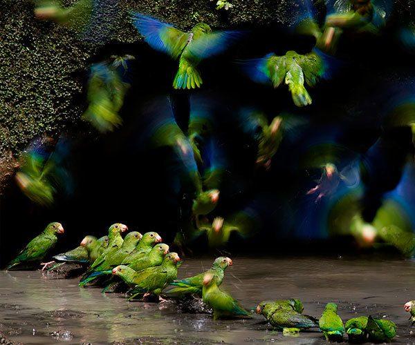 biodiversity of the amazon