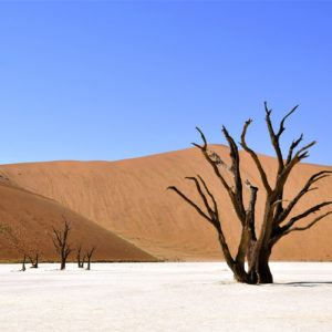 Photo of the week: Deadvlei, Namib-Naukluft National Park, Namibia