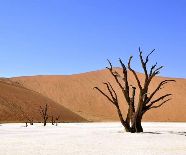 Photo of the week: Deadvlei, Namib-Naukluft National Park, Namibia