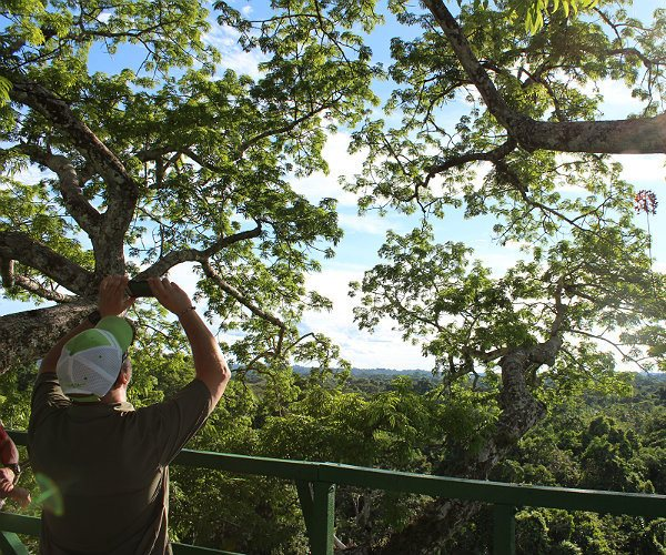 Look Out Tower- Napo Wildlife Center
