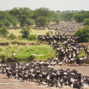 What makes the Great Wildebeest Migration so great