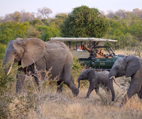 Game drive at Jock Safari Lodge