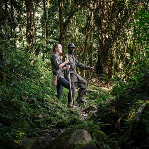 Guest trekking to see gorillas with guide, Gorilla Forest Camp