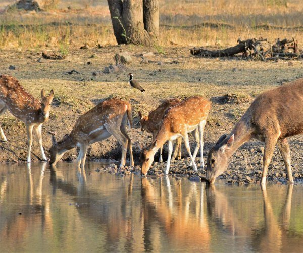 wildlife-safari India
