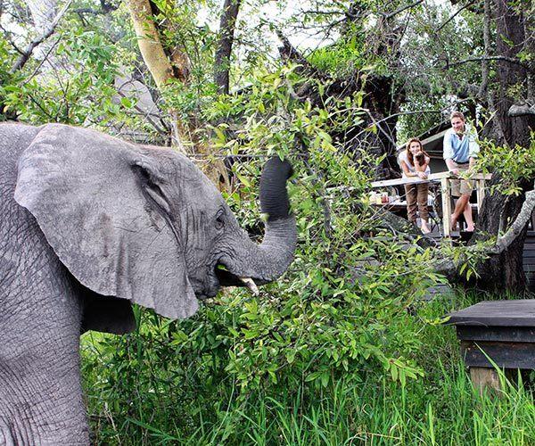 Couple watching elephant up close