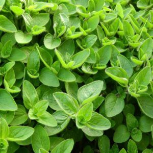 5 healthy Greek herbs to include in your diet